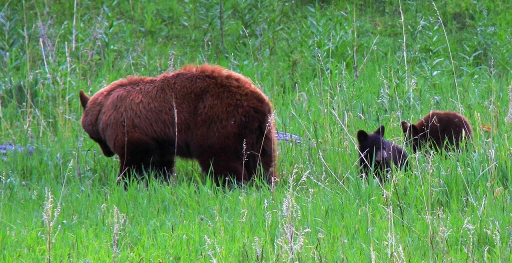 120617_6455-1 熊の親子