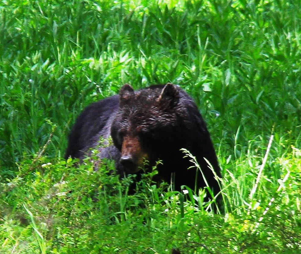 120619_6846-1 母熊