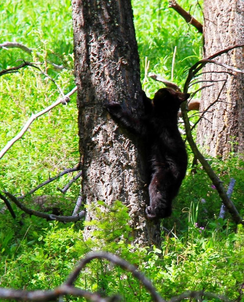 120619_6859-1 小熊